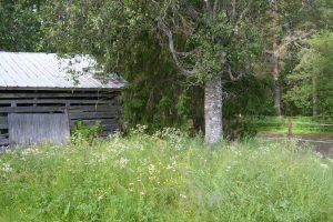 Vanha puimalato